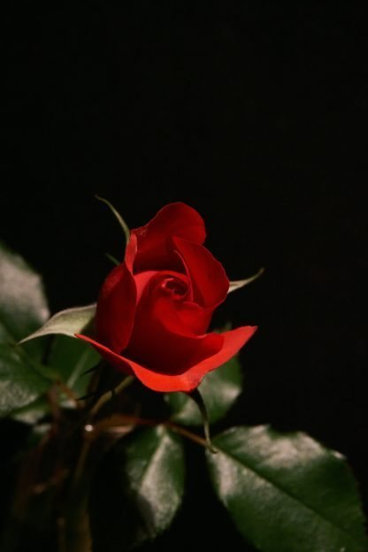 Blood of Love - Irish Blessings | A Blessed Call to Love's Shop