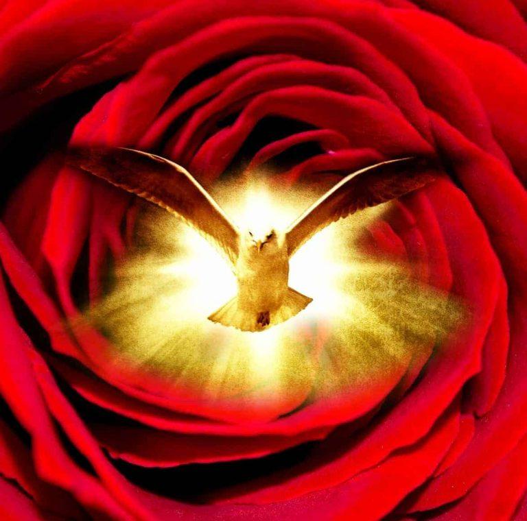 Holy Spirit Healing Oil